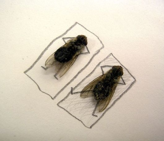 Making Art with Dead Flies