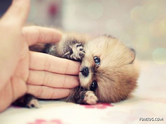 Very Cute Puppies for You