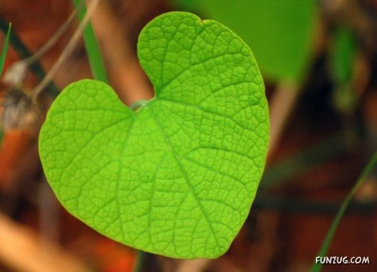Awesome Hearts By The Nature