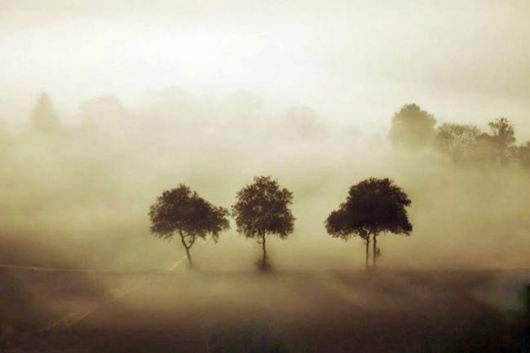 Amazing Foggy Nature Pictures