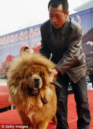 Meet The Worlds Most Expensive Dog